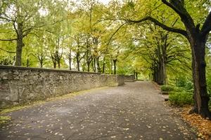 Grīziņkalna parka un Ziedoņdārza koku inventarizācijas atzinumi