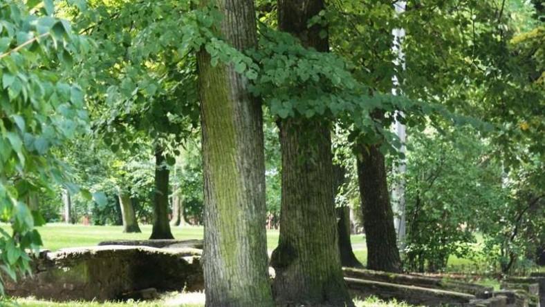 Miera dārzā atklās lielāko betona skeitparku Latvijā