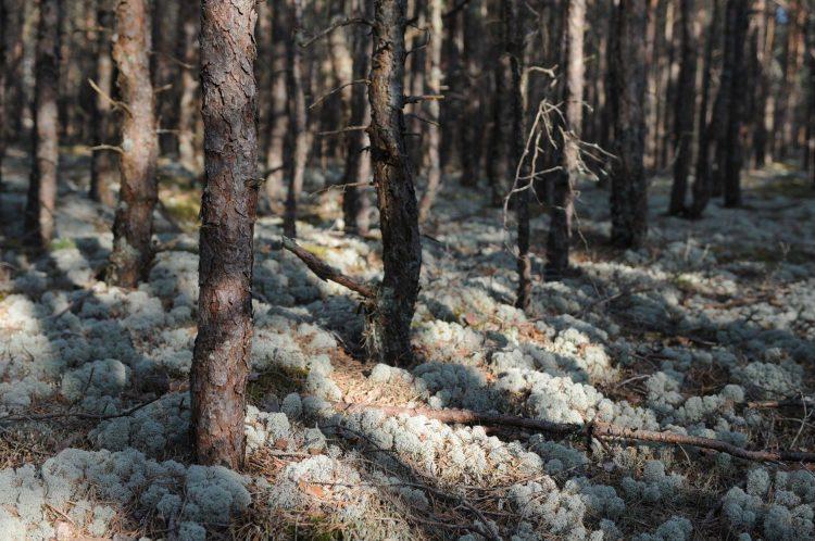 Aptauja: Sabiedrības viedoklis par dabas parku «Piejūra»