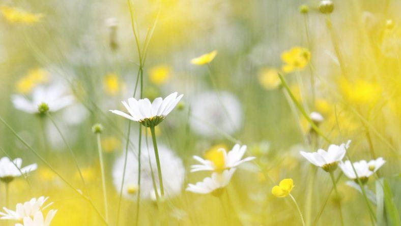 Vakarbuļļu dabas dienā aicina izzināt bioloģisko daudzveidību pļavā