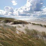 Aicina izzināt dabas daudzveidību Mangaļsalas pludmalē un kāpās